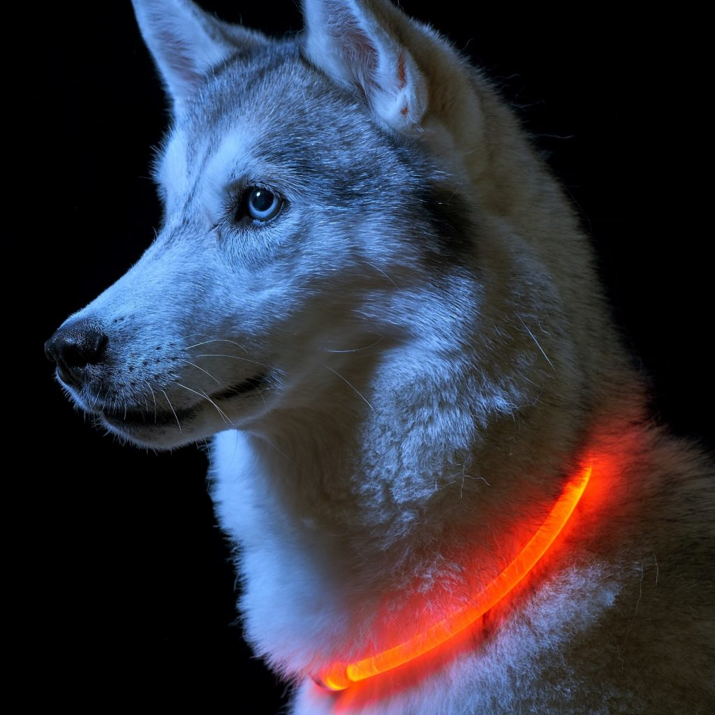 Halo Mini for Dogs